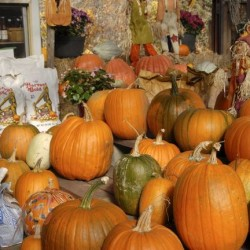 Plenty of pumpkins in Maine patches
