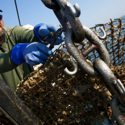 Maine ports among top nationwide for fisheries volume, value