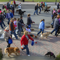 Paws on Parade lets pets, owners strut their stuff