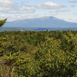 Amherst forest project to benefit people of Maine