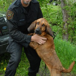 Successful St. Francis manhunt turns into family reunion for NH police officer, handler for bloodhound
