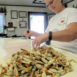 Gulf fishermen reel from seafood troubles
