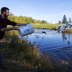 Removal of some species aids growth of trout