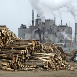 New forest products study shows industry is far from dying, advocates say