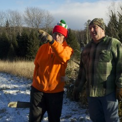 Christmas tree growers hopeful about season as plastic rivals make gains