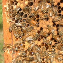 Learn about honeybees at the Maine Wildlife Park