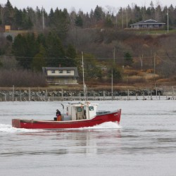 Scallop season cut back for Maine fishermen