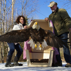 'He's ugly, but he deserves to live': Turkey vulture rescued after being stuck in tree for 28 hours