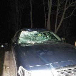 Two moose on I-95 lead to three-car crash near Lincoln — — Bangor