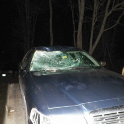 I-95 collision injures man, kills moose