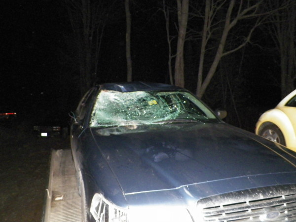 Two Moose On I 95 Lead To Three Car Crash Near Lincoln Penobscot