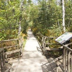 Orono Bog Boardwalk project an opportunity to teach out-of-staters forest not dark, mysterious place