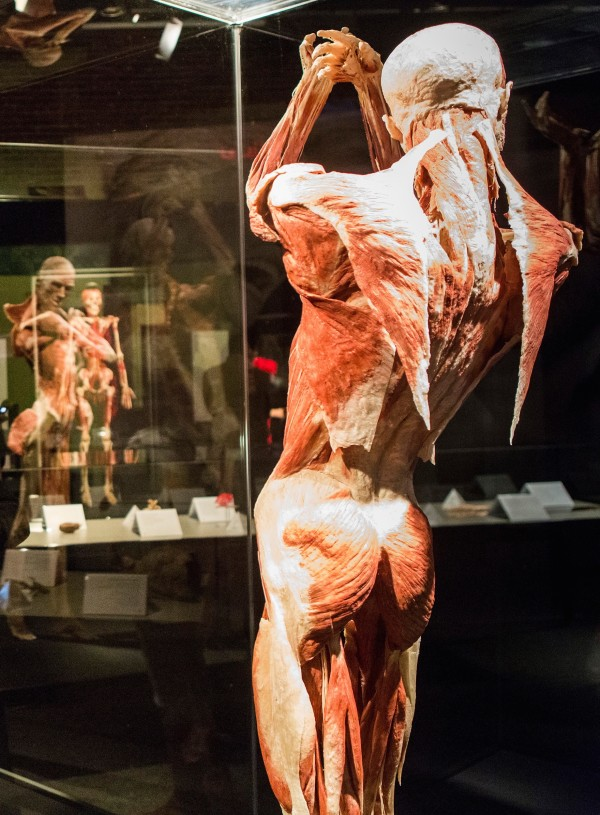 Body Worlds At The Portland Science Center User Submitted Bangor