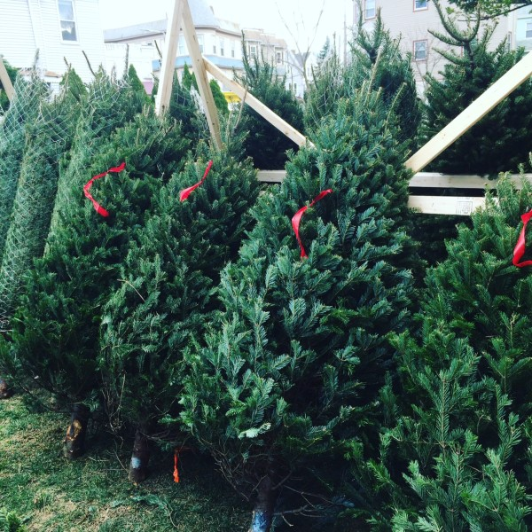 maine farmer travels 200 miles to sell wares christmas trees - Sales On Christmas Trees