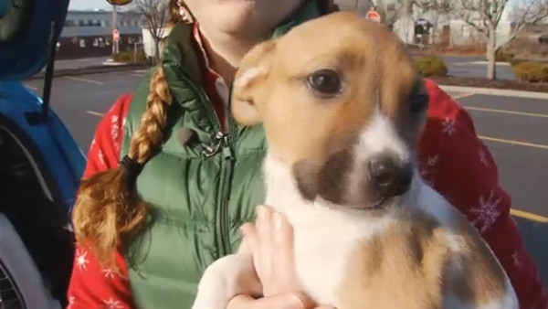 Brunswick Humane Society Delivers Puppies For Christmas Midcoast