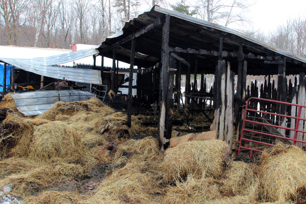Fire Destroys Barn Kills 17 Pigs And A Cow In Island Falls