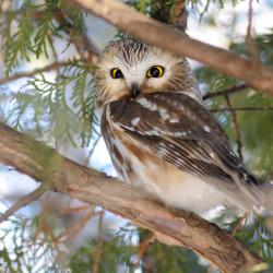 Avid birders cherish December arrivals