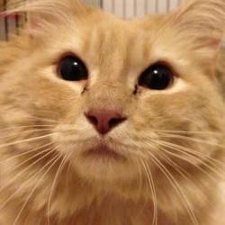 Grant to help Caribou pet rescue expand pilot program