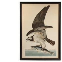 """Fish Hawk, Male, Falco Hallaetus"", hand colored lithograph by John J. Audubon, one of 1,200 fine items to be sold at Thomaston Place Auction Galleries on Feb. 13 & 14"