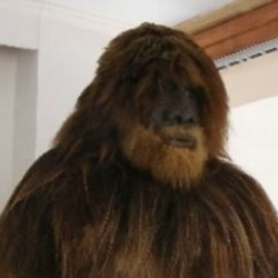 Discover secrets of Bigfoot, Loch Ness in the only cryptozoology museum in the world