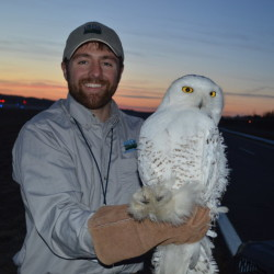 The U.S. Department of Agriculture's Wildlife Services relocated four snowy owls from the airfield at Brunswick Executive Airport in early 2015.