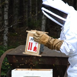 Keepers feeding bees honey substitutes may contribute to colony collapse disorder, says study