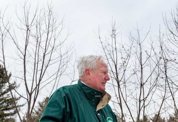 """Glen Rea walks along rows of young American chestnut trees in the Buck Hill Conservation Area on Thursday he helped plant 11 years ago. Volunteers from the Maine chapter of the American Chestnut Foundation have planted 27,000 blight-resistant hybrid chestnut trees in seed orchards around the state and plan to plant 27,000 more trees in the next few years. """"&quotPeople just love the chestnut tree so much,""""&quot he said. """"&quotI''m an old man now. I won''t see much of this [come to fruition]. But 100 years down the road, it's going to be just a different environment.""""&quot"""