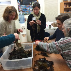 Maine teachers learn about seaweed aquaculture by getting hands-on experience with different seaweed species.