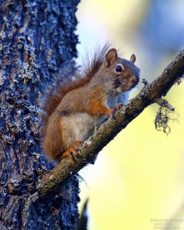 How To Hunt Squirrels In Your Backyard what can i shoot and when can i shoot it? part three – it was a red