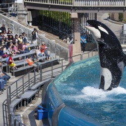 'Blackfish' has SeaWorld in hot water