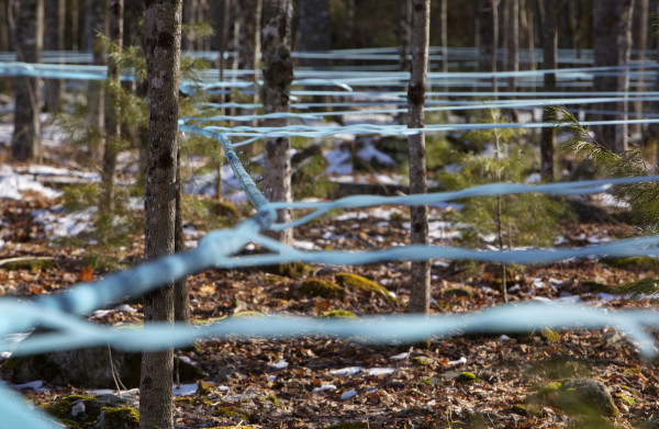 Sap lines weave throughout the property at Nutkin Knoll Farm and Sugarworks in Newburgh Saturday.