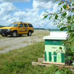 Two trial honeybee hives at Bangor International Airport.