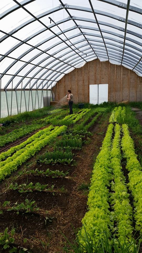 Whether Farming Or Homesteading Love Of Land Unites Local Food