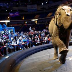 Appeals court upholds dismissal of elephant suit