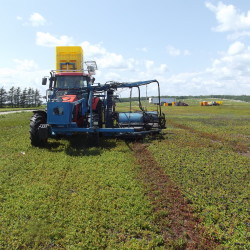 Maine wild blueberry industry may benefit from farm bill pilot program