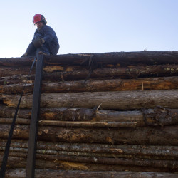 Tom Pelkey of Orland climbs on top of his load of logs to secure them in Blue Hill, Oct. 9, 2014.