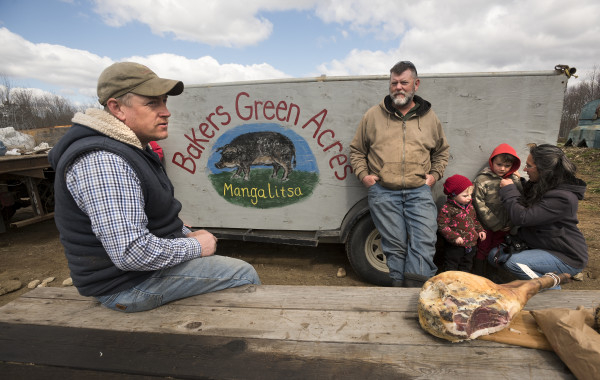 Jerry Ireland (left) and Mark Baker talk about the mangalitsa pigs that Baker brought to Ireland Hill Farm in Swanville on Wednesday.  The Baker family raises the animals, that are prized for the quality of their meat at Bakers Green Acres farm in Michigan. Also pictured are Jill Baker (from right), Frank Baker and Aana Ireland.