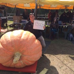 'Maybe we're just crazy': How did a Maine town of 2,000 people become known as Pumpkinville, anyway?