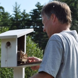 Jeff Nims removes bluebird hatchings in order to replace their nest with a clean, new one.