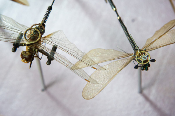 Dragonflies, enhanced with mechanical components, sit atop a bench at Mike Libby's Insect Lab studio in Portland.