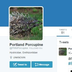 Somebody stole a porcupine made of nails from Portland International Jetport