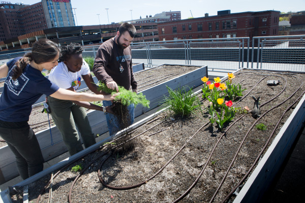Urban Gardeners Plotting On The Roof, In The Streets Of Portland U2014  Homestead U2014 Bangor Daily News U2014 BDN Maine