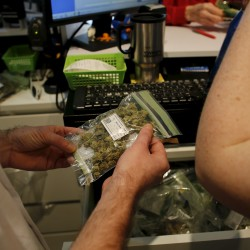 Judge rules DHHS can impose fee on medical marijuana providers