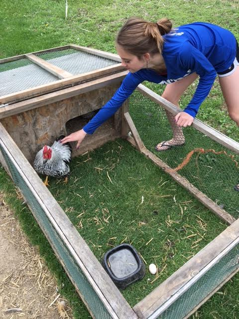 Maddie DeMoranville, 13, checks a bird Thursday morning at 4D's Farm in Bradford, where her family raises many chickens and other birds. Maddie helps feeds the birds, water them, collect and hatch the eggs and other chores, which she said have helped her become more responsible.