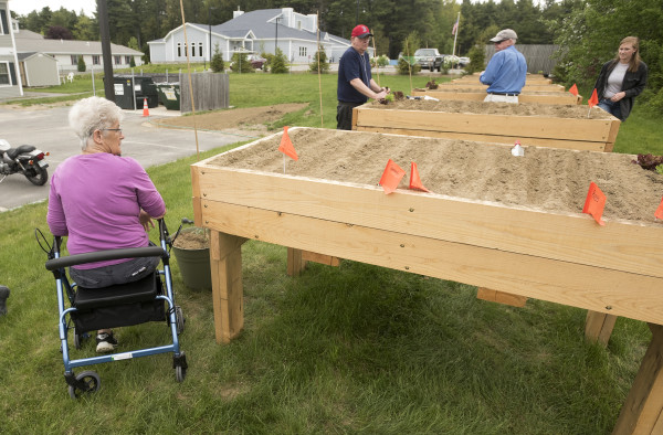 Maine seniors will grow fresh veggies for umaine research for Garden design for disabled