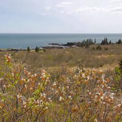Bird Walk at Hamilton Cove