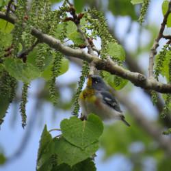 Binoculars are a pesky but necessary birding accessory
