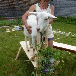 Mofga S Annual Celebration Of Homesteading To Teach Delight This