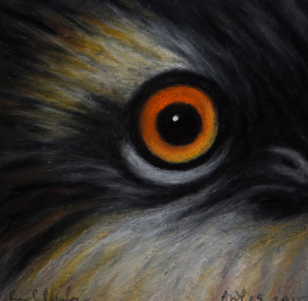 Osprey (immature), April 29, 2015, oil pastel on paper by Rev. Paul Plante.