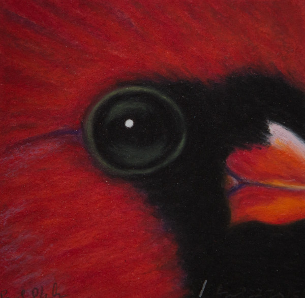 Northern Cardinal, April 22, 2014, oil pastel on paper by Rev. Paul Plante.
